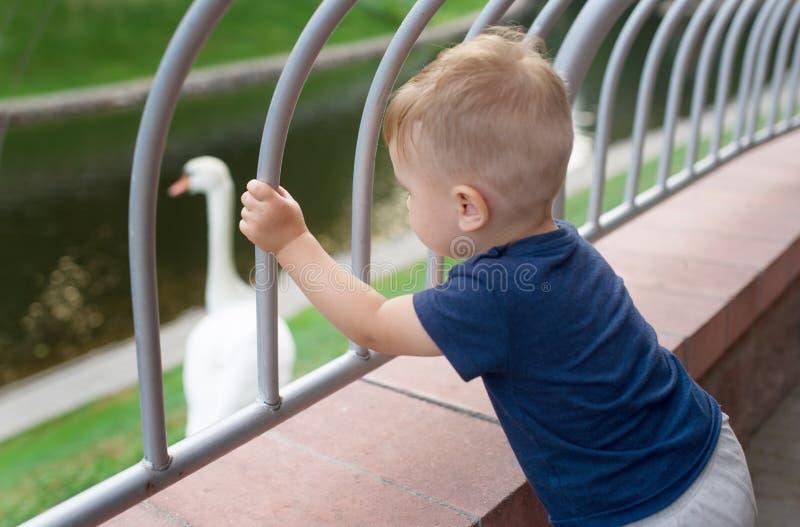 Il ragazzino sta da solo sul ponte, vedendo il lago ed il cigno fotografie stock libere da diritti