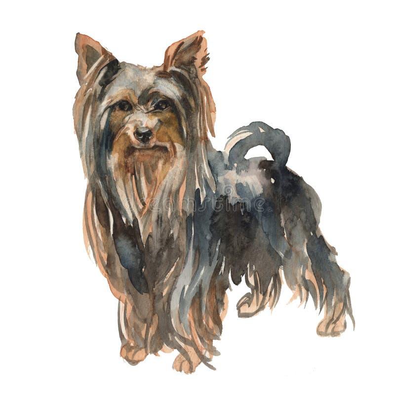Il ragazzo dell'Yorkshire terrier royalty illustrazione gratis