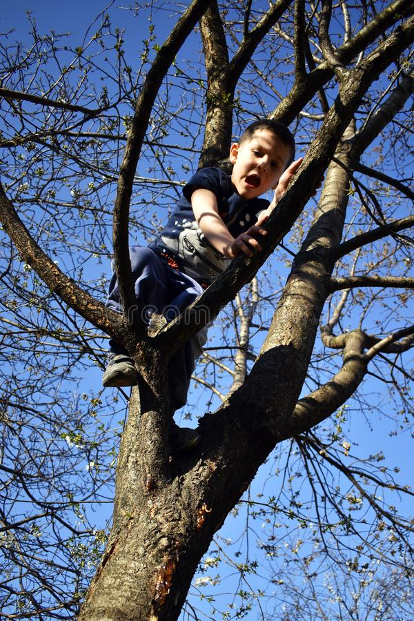 Il ragazzo di 4 anni sull'albero ha problema da scendere dall'albero fotografie stock