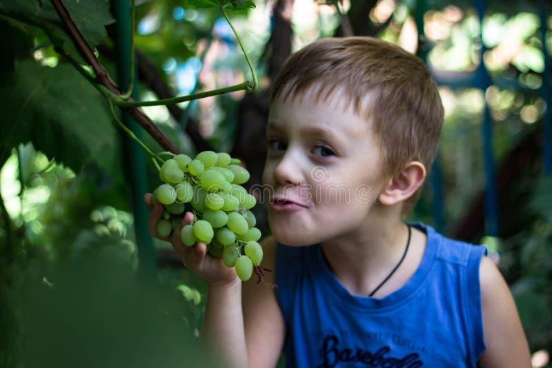 Il ragazzo morde fuori un pezzo di mazzo di uva immagine stock libera da diritti