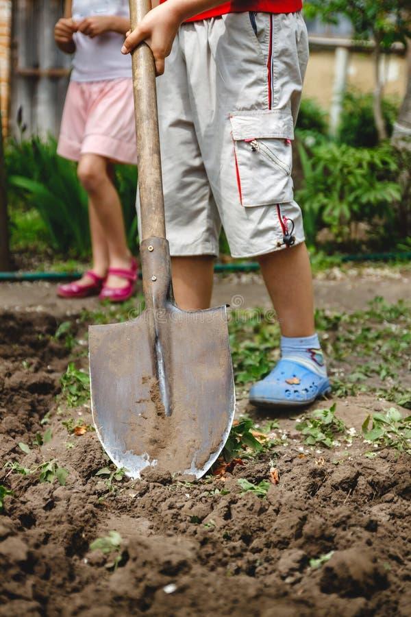 Il ragazzo sta scavando un orto con una grande pala Il concetto degli adulti d'aiuto e lavoro dall'infanzia immagine stock libera da diritti