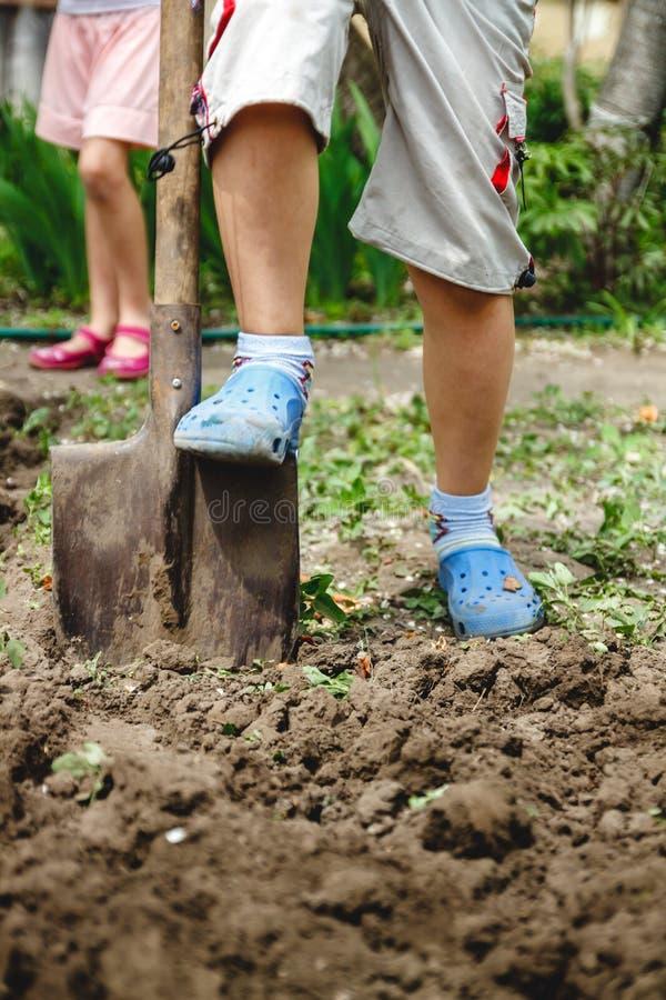 Il ragazzo sta scavando un orto con una grande pala Il concetto degli adulti d'aiuto e lavoro dall'infanzia fotografie stock libere da diritti