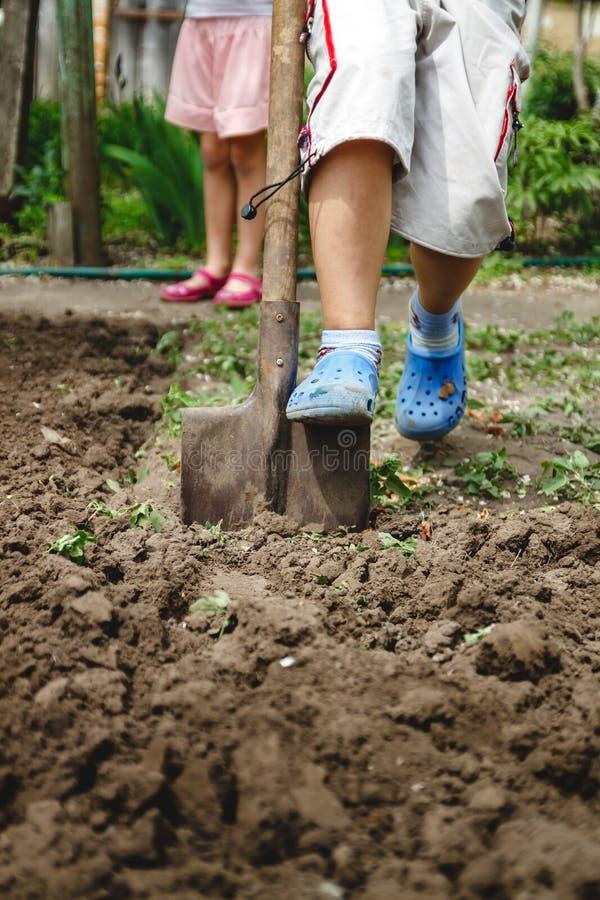 Il ragazzo sta scavando un orto con una grande pala Il concetto degli adulti d'aiuto e lavoro dall'infanzia fotografie stock