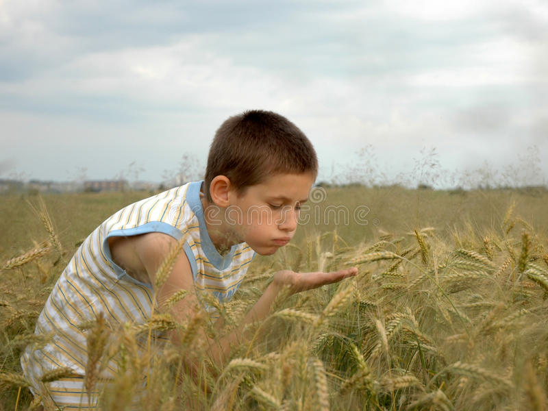 Il ragazzo sta spegnebbi il cereale fotografie stock libere da diritti