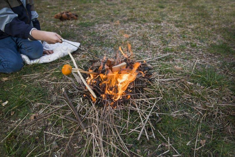 Il ragazzo tiene i pezzi di prosciutto sopra il fuoco l'alimento al campo su fuoco immagini stock