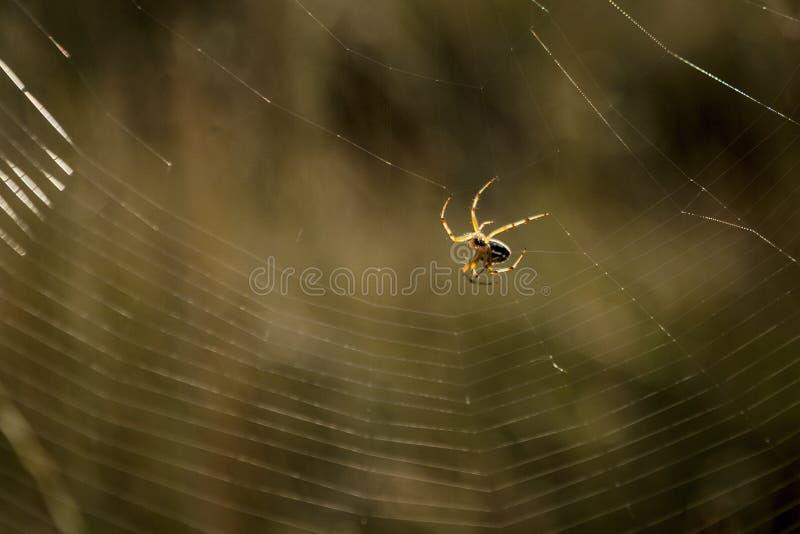 Il ragno ha filato il suo web fotografie stock