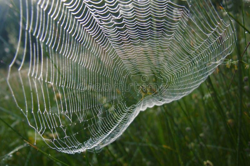 Il ragno ha sparso fuori le reti di mattina Rugiada di mattina, silenzio, pace, beatitudine Ragnatela nella foresta scura, la rug immagine stock libera da diritti