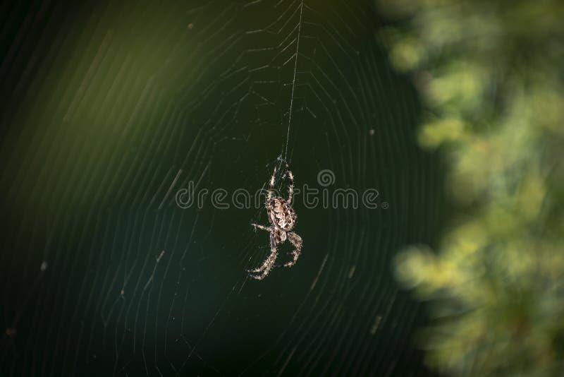 Il ragno in mezzo al suo tricotta la rete fotografia stock libera da diritti