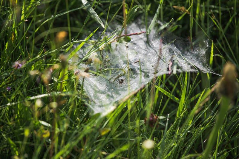 Il ragno si siede sul web fotografia stock libera da diritti