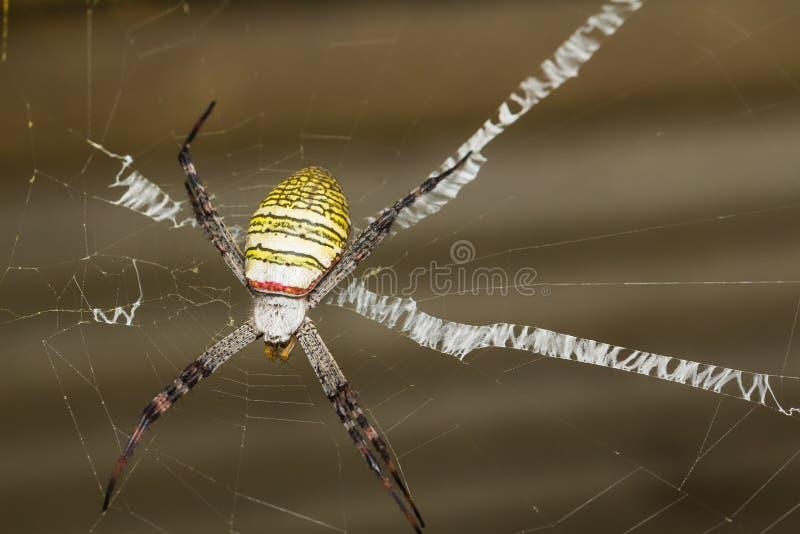 Il ragno trasversale di St Andrew fotografia stock
