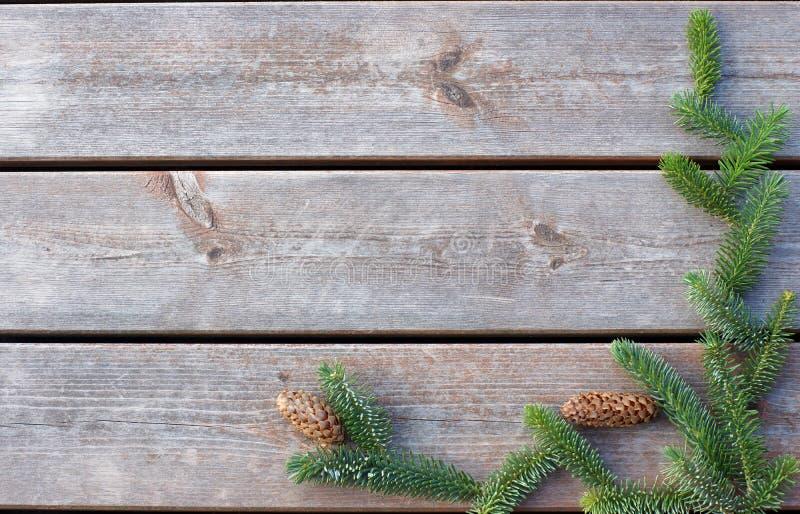 Il ramo attillato verde si trova su un fondo di legno, spazio della copia per il vostro testo immagini stock libere da diritti