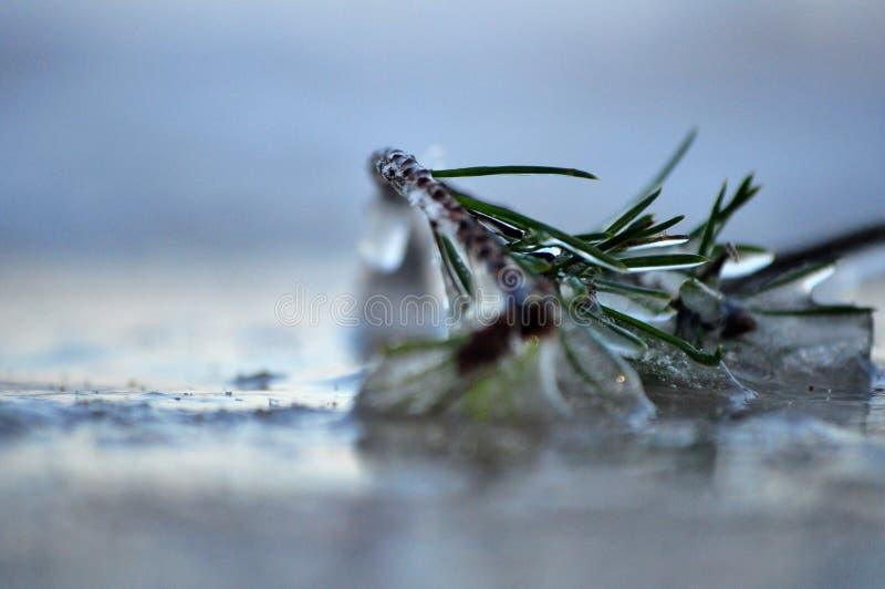 Il ramoscello è coperto da ghiaccio sulla spiaggia immagini stock