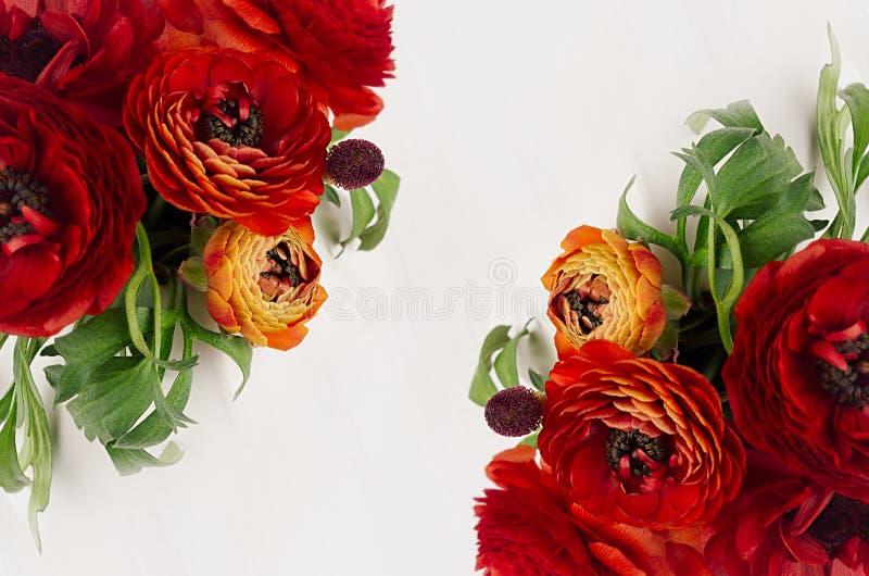 Il ranuncolo di rosso ricco fiorisce con le foglie verdi che la vista superiore come decorativo rasenta il fondo bianco Mazzo del fotografie stock