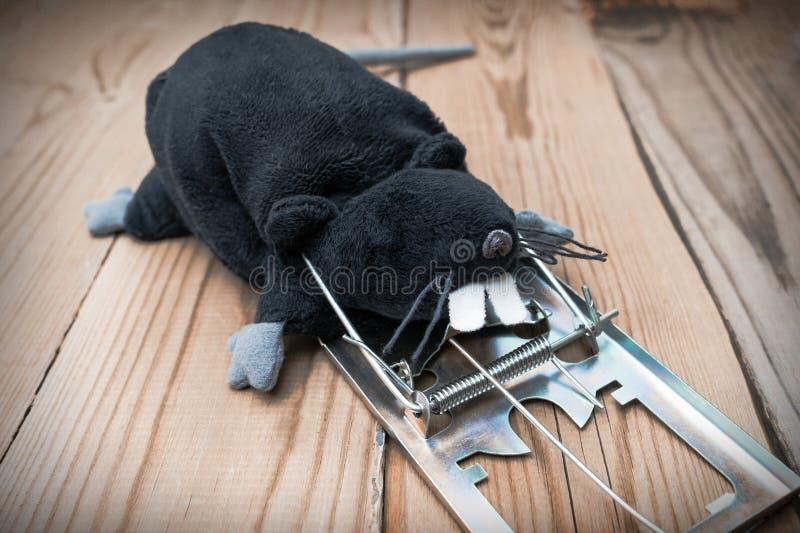 Il ratto del giocattolo della peluche è nero Il topo ha colpito la trappola per topi immagine stock libera da diritti