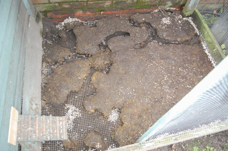 Il ratto esposto funziona sotto la pavimentazione del reticolato di saldatura dell'uccelliera fotografie stock libere da diritti