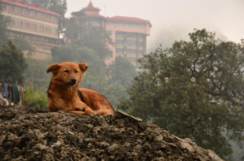 Il re del cane fotografie stock libere da diritti