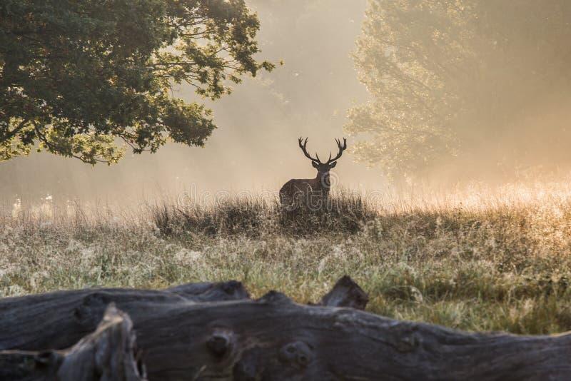 Il re della foresta fotografie stock libere da diritti