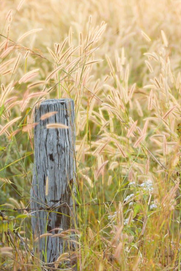 Il recinto del filo spinato del paese con vecchio collega i campi di erba di missione al crepuscolo immagine stock libera da diritti