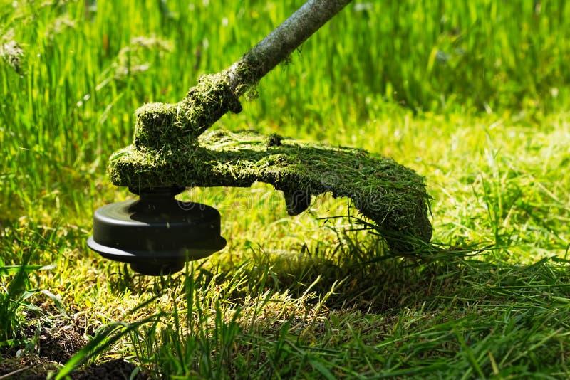 Il regolatore del prato inglese della benzina falcia l'erba verde succosa fotografia stock libera da diritti