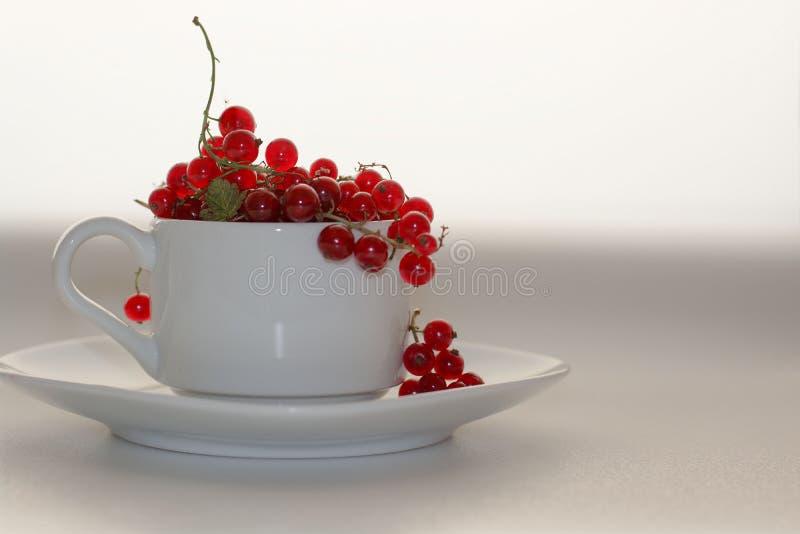 Il ribes rosso in una tazza bianca con un piattino su un fondo bianco summerred l'uva passa in una tazza bianca con il piattino s fotografie stock
