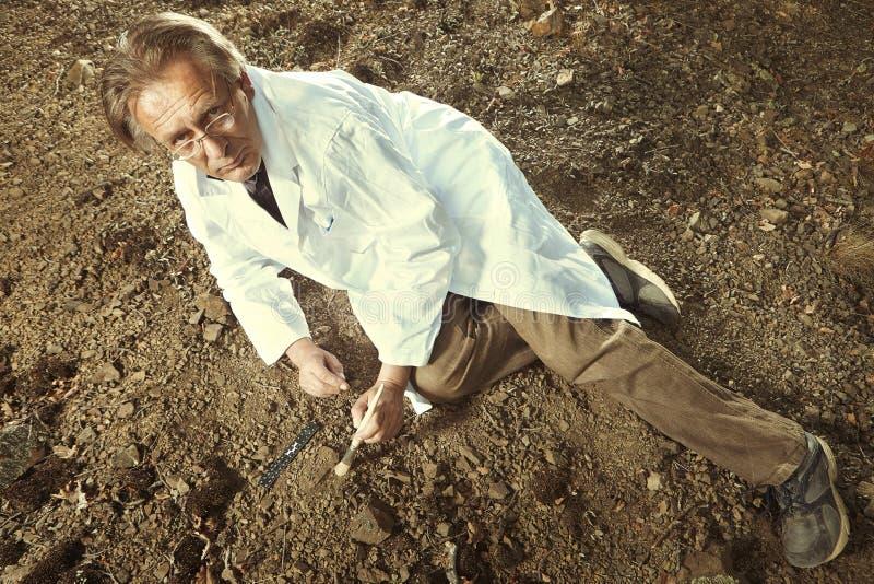 Il ricercatore più anziano ha trovato la trilobite fossile su posizione rocciosa fotografia stock