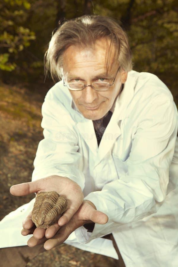 Il ricercatore più anziano ha trovato la trilobite fossile su posizione rocciosa fotografia stock libera da diritti