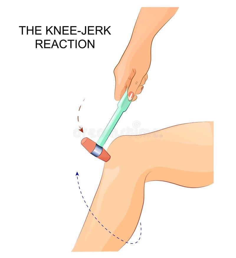 Il riflesso di riflesso del ginocchio royalty illustrazione gratis