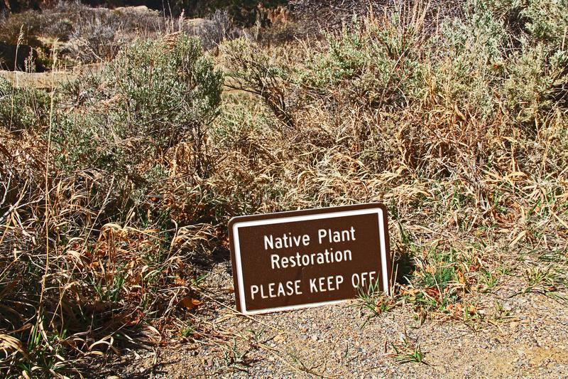 Il ripristino della pianta indigena firma dentro il canyon nero alla vista della voragine fotografia stock