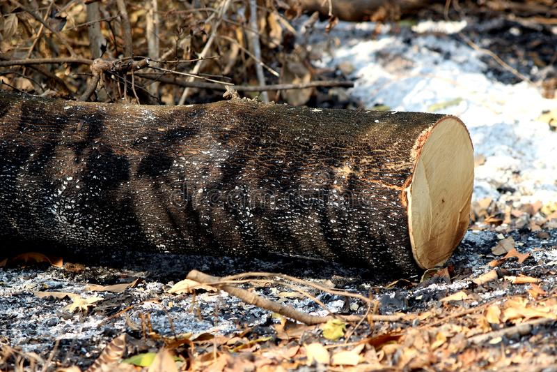 Il riscaldamento globale, disbosca il mazzo dei ceppi di albero di recente tagliati e brucia immagini stock