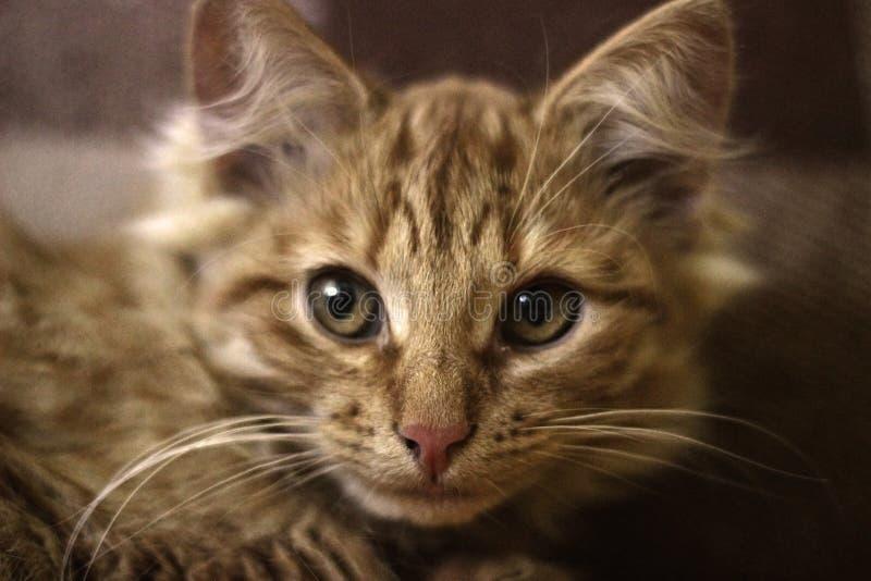 Il ritratto di Kitty fotografia stock
