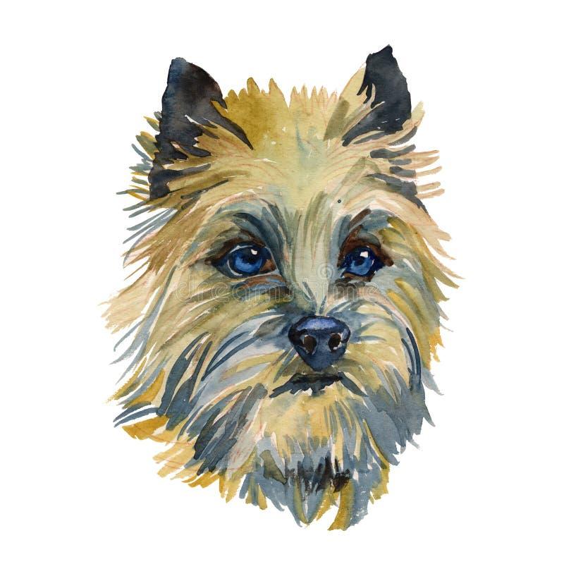 Il ritratto di Terrier di cairn illustrazione vettoriale
