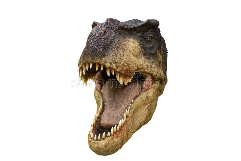 Il ritratto di un dinosauro ha chiamato il rex di Tyrannosaurus su fondo bianco fotografia stock