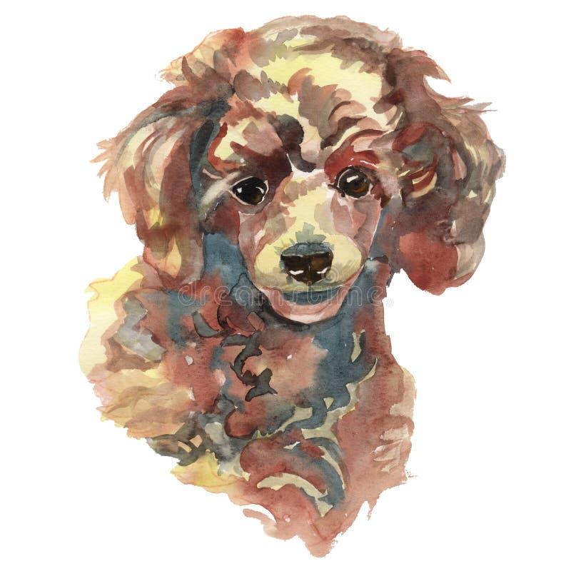 Il ritratto dipinto a mano del cane dell'acquerello di Toy Poodle illustrazione di stock