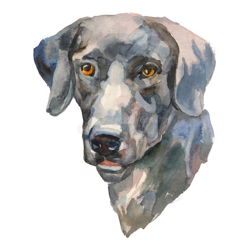 Il ritratto dipinto a mano del cane dell'acquerello del eurohound illustrazione vettoriale