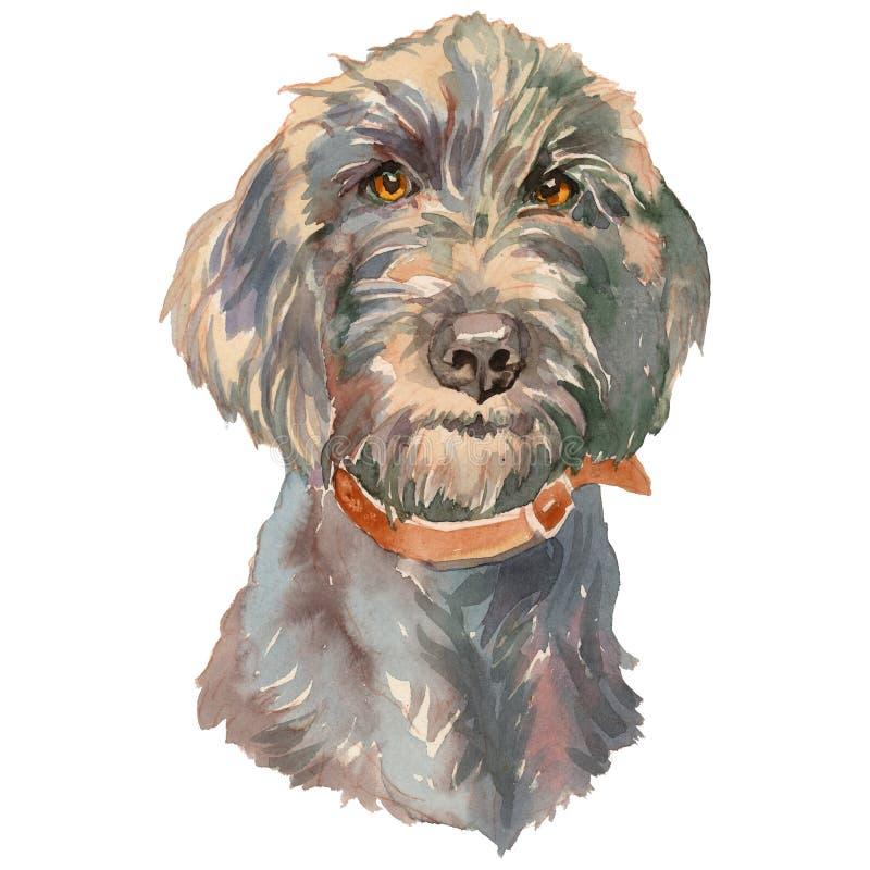 Il ritratto dipinto a mano del cane dell'acquerello del pudelpointer royalty illustrazione gratis