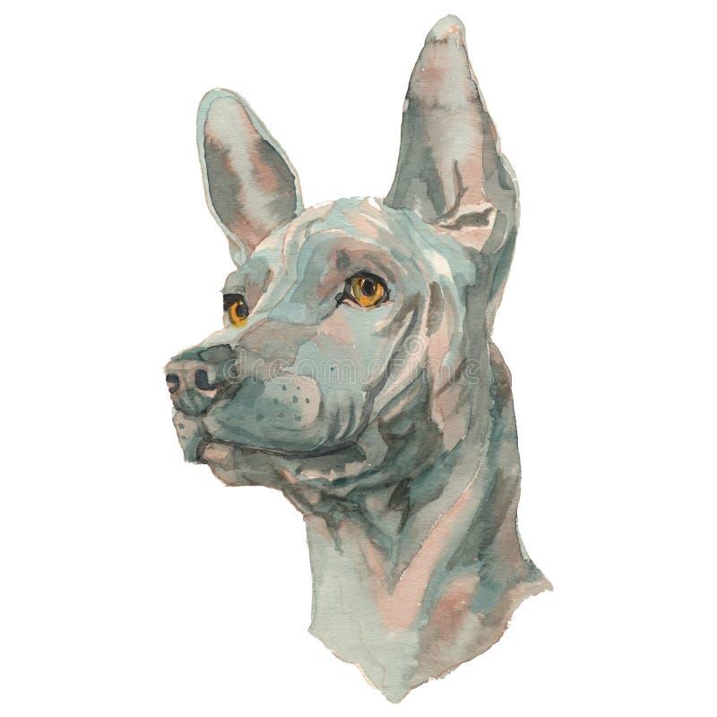 Il ritratto dipinto a mano del cane dell'acquerello tailandese di Ridgeback royalty illustrazione gratis