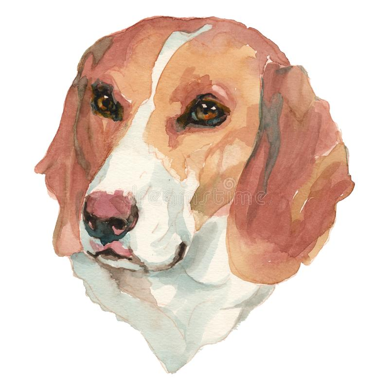 Il ritratto dipinto a mano del cane del piccolo acquerello svizzero del segugio illustrazione di stock