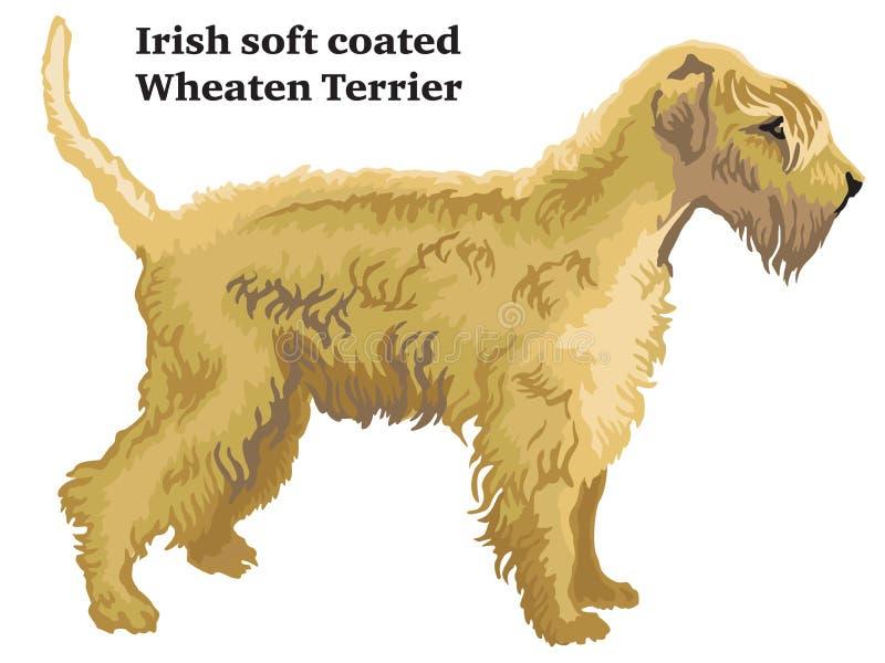 Il ritratto diritto decorativo colorato della morbidezza irlandese ha ricoperto l'illustrazione Wheaten di vettore di Terrier royalty illustrazione gratis