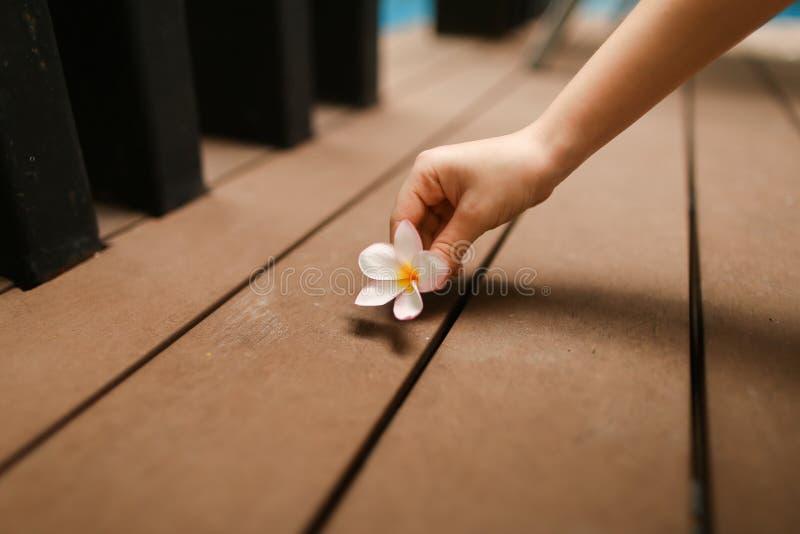 Il ritratto dolce del fiore scherza il giorno della mano con il sole immagine stock libera da diritti