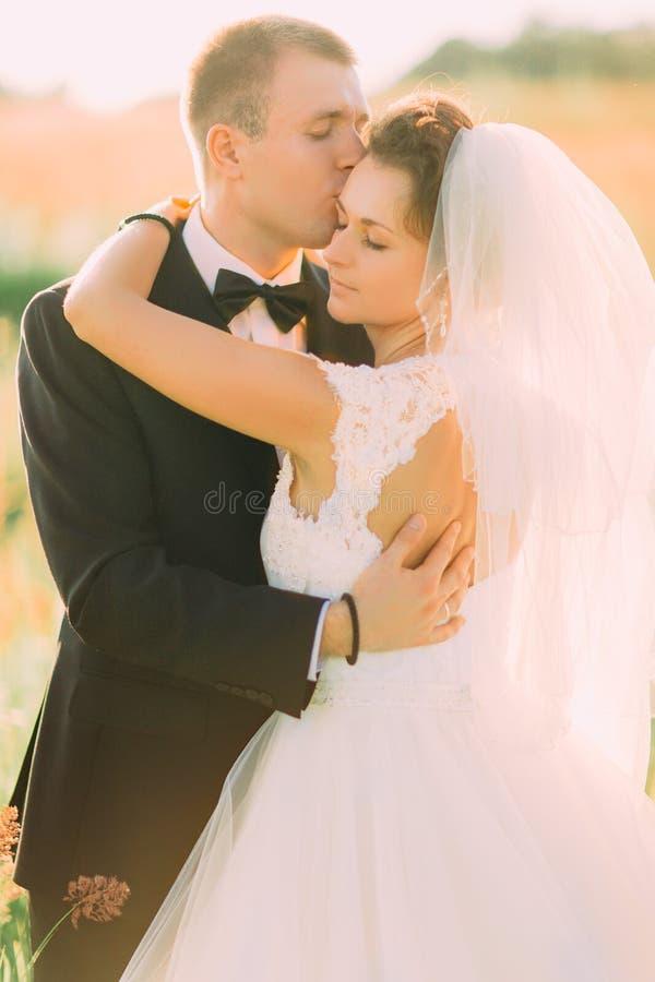 Il ritratto sensibile del primo piano dello sposo che bacia la sposa nella fronte nel giacimento di grano immagine stock
