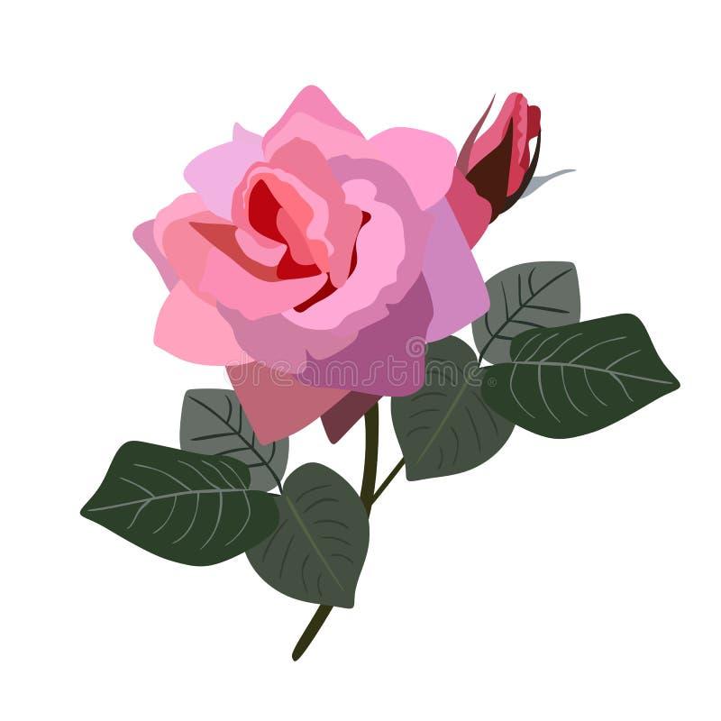 Il rosa è aumentato con il germoglio e le foglie isolati su fondo bianco nello stile piano Illustrazione di vettore illustrazione di stock