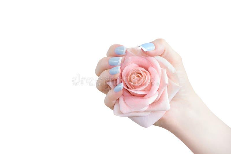 Il rosa ? aumentato germoglio a disposizione Primo piano immagini stock libere da diritti