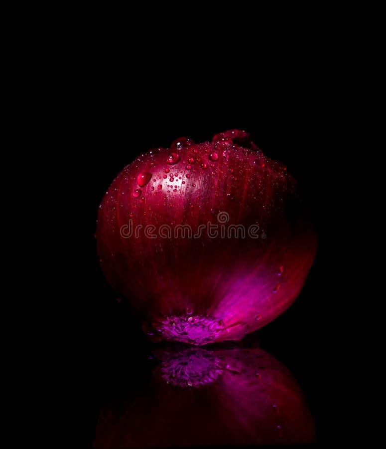 Il rosso ha affettato la spezia della cipolla, fetta, taglio, crudo, alimento, ingrediente, metà, pianta, organico, bianco, fresc immagini stock