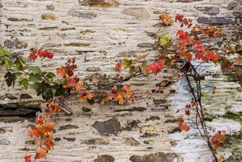Il rosso ha colorato la pianta prima della parete di bianco della muratura immagine stock