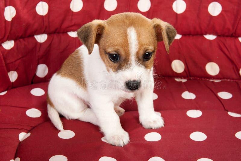 Letto dell'animale domestico macchiato rosso con il piccolo cucciolo fotografia stock libera da diritti
