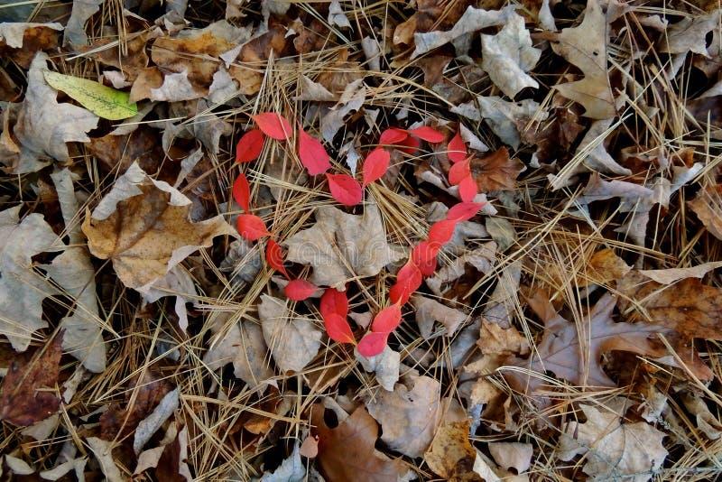 Il rosso lascia il cuore a forma di fotografie stock libere da diritti
