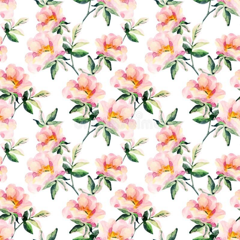 Il rovo dell'acquerello fiorisce il modello senza cuciture Rami della rosa canina illustrazione di stock