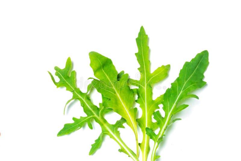 Il rucola o la rucola fresco copre di foglie isolato fotografie stock