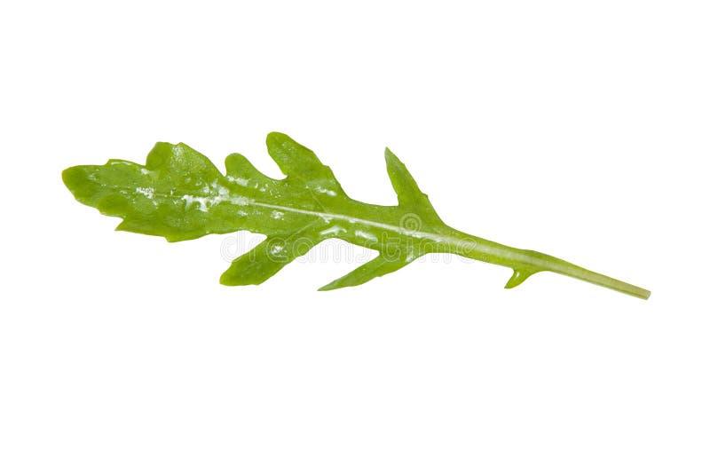 Il rucola o la rucola fresco verde copre di foglie isolato su fondo bianco fotografia stock libera da diritti