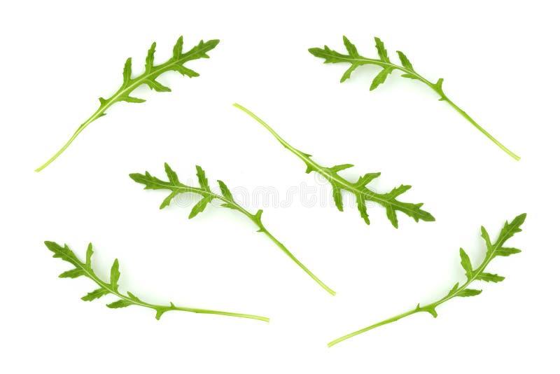 Il rucola o la rucola fresco verde copre di foglie isolato fotografia stock